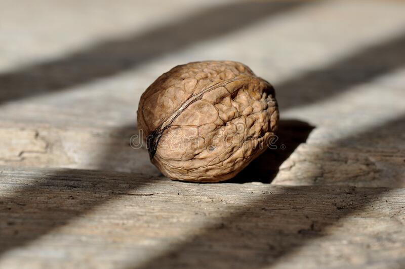 Brown Round Fruit on Grey Wooden Panel stock photo
