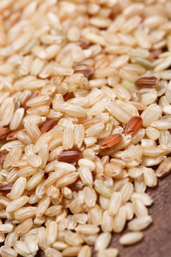 Brown ryż obraz royalty free