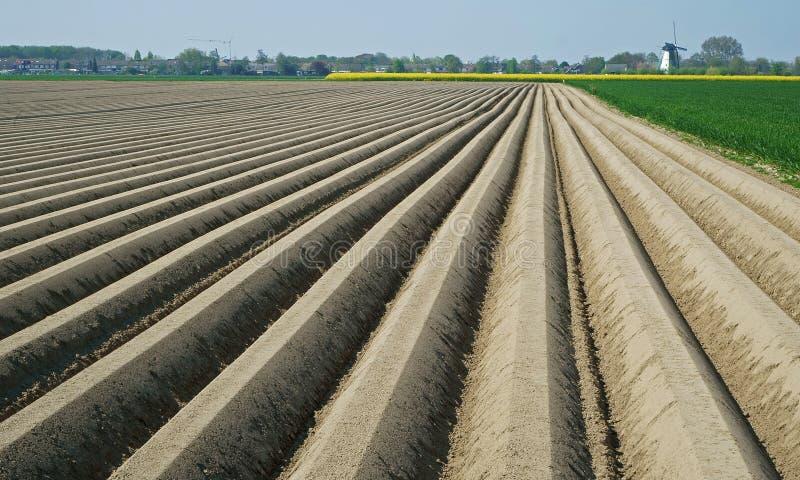 Brown rz?dy tworzy potatoe pola w Zeeland ziemia zdjęcia royalty free
