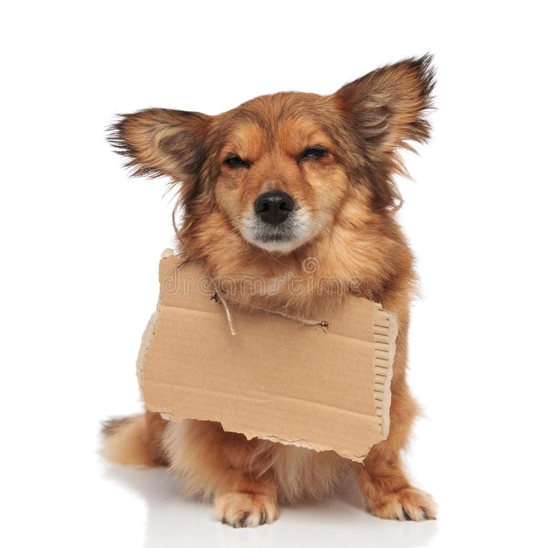Brown sad beggar dog with empty cardboard around neck stock photography