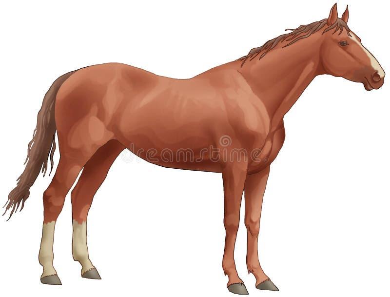 Brown-schönes Pferd. Rückseitige Fahrwerkbeine des Weiß, ein langer tai vektor abbildung