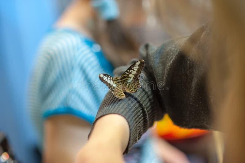 Brown-Schmetterling mit weißen Stellen sitzt an Hand lizenzfreie stockfotografie