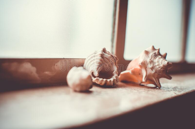 Brown Sea Shell on Brown Surface Near Window royalty free stock photo