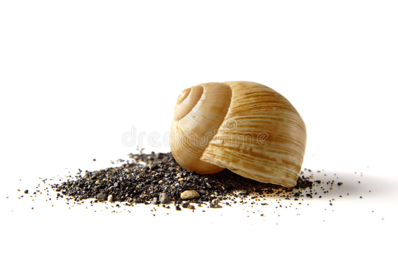 Brown seashell with black sand royalty free stock photo