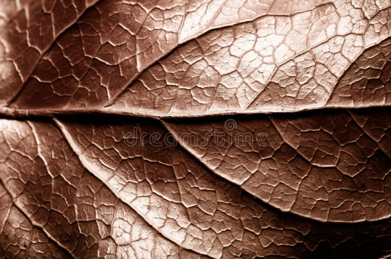 Brown sepia toned dry leaf rugged surface structure extreme macro closeup photo with midrib parallel to the frame and visible leaf stock photo
