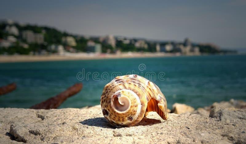 Brown Shell en de piedra cerca en el mar fotos de archivo libres de regalías