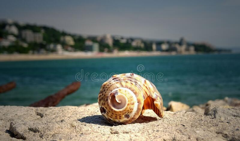 Brown Shell on Stone Near in Sea royalty free stock photos