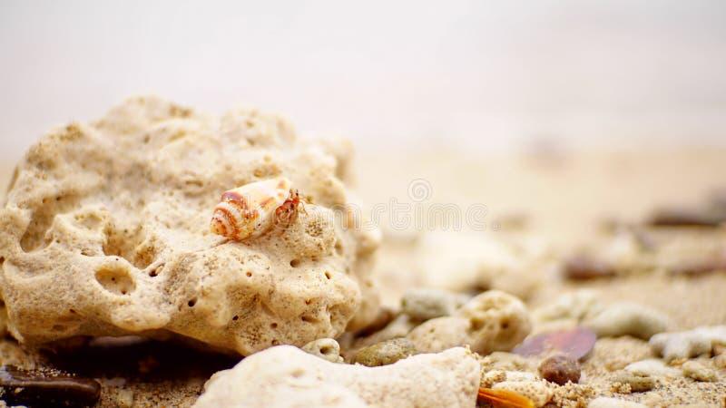 Brown Shell sulla Pietra immagine stock