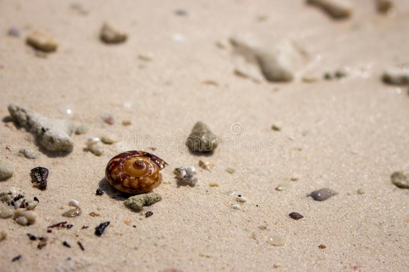 Brown shell on white sand beach. Small seashell. Tropical nature object. Ocean wildlife. stock photo