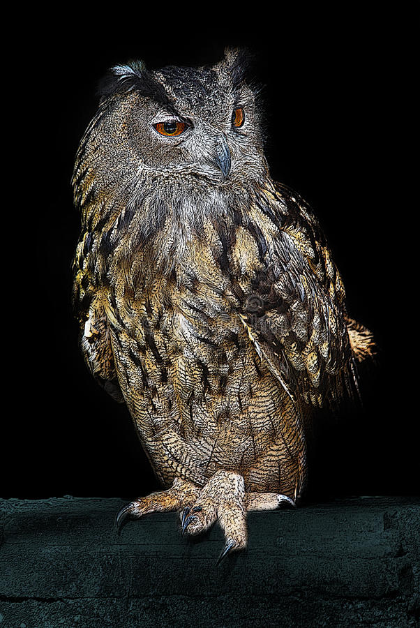 Brown and Silver Owl Standing on Green Textile stock photos