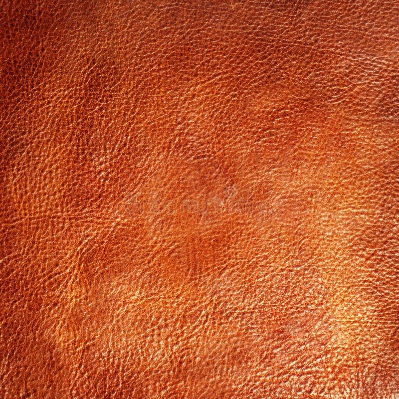 Brown skóra obrazy stock