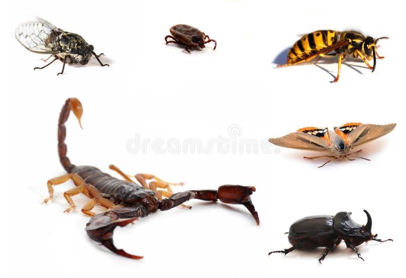 Brown-Skorpion und Insekte lizenzfreie stockbilder