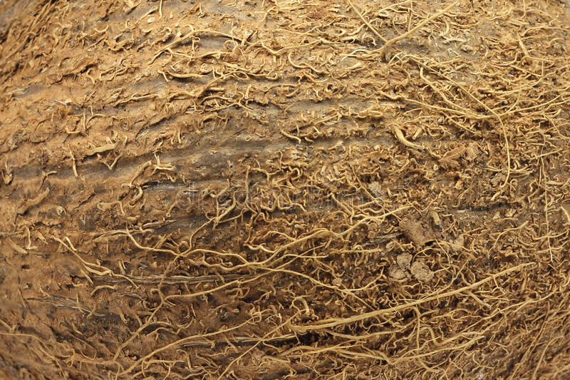 Brown skorupy kokosowa tekstura obrazy stock