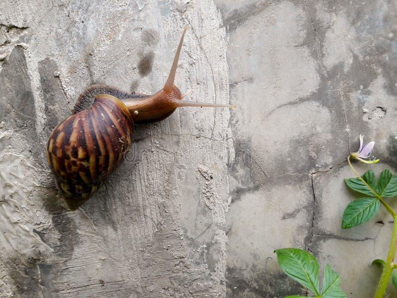 Brown Snail Free Public Domain Cc0 Image