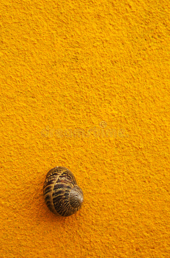 Brown snail shell on yellow wall stock image