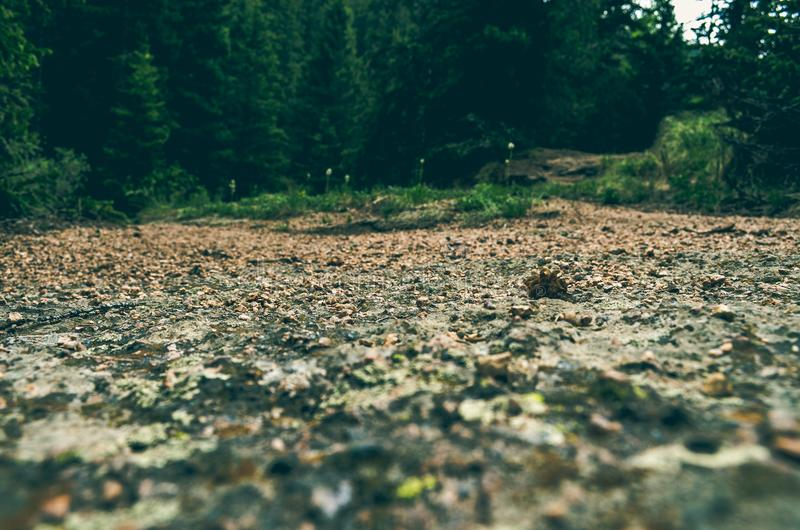 Brown Soil Near Green Trees stock photos