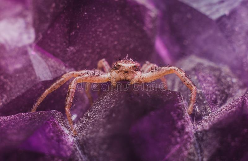 Brown Spider on Purple Crystal royalty free stock photo
