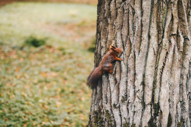Brown Squirrel Holding On Tree Free Public Domain Cc0 Image