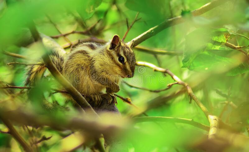 Brown Squirrel Perched On Tree Branch In Selective Focus Photography Free Public Domain Cc0 Image