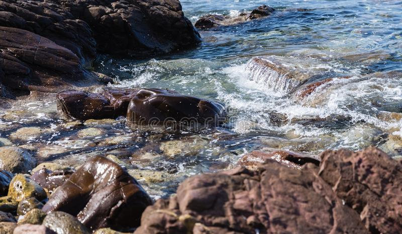 Brown stone in close-up. Surrounded by sea water to form white foam; rocky coastline royalty free stock image
