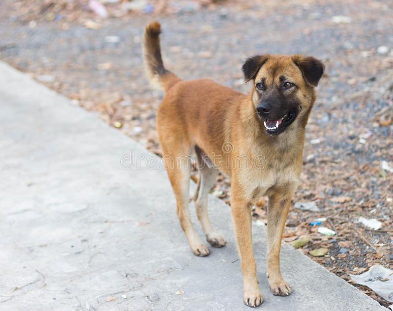 brown stray dog standing royalty free stock photos