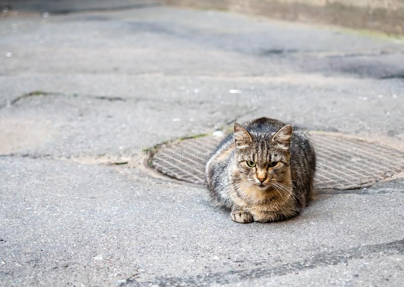 Brown street cat lay on floor royalty free stock images