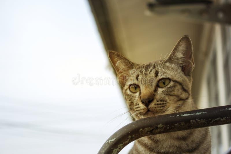 Brown streifte Katzen spielen in den verschiedenen Gesten stockfoto