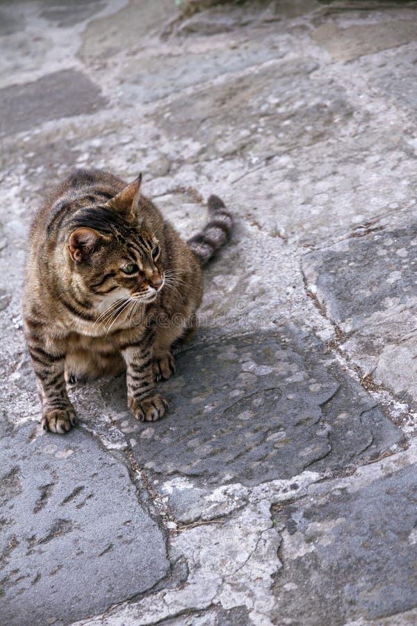 Brown streifte Katzenblicke vorsichtig und sitzt auf einer grauen Pflasterstraße lizenzfreies stockfoto