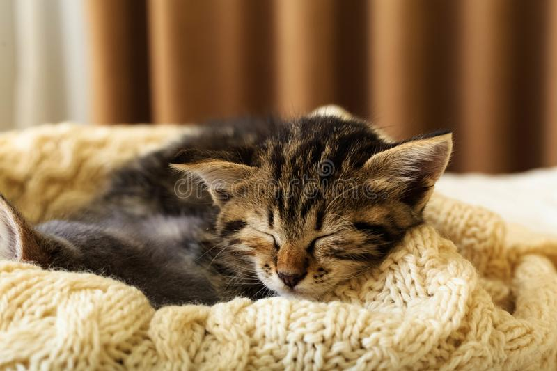 Brown striped kitty sleeps on knitted woolen beige plaid. Little cute fluffy cat. Cozy home.  royalty free stock photos