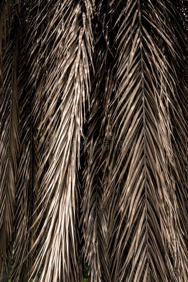 Brown strips of dry palm leaf parts. Abstract background stock photos