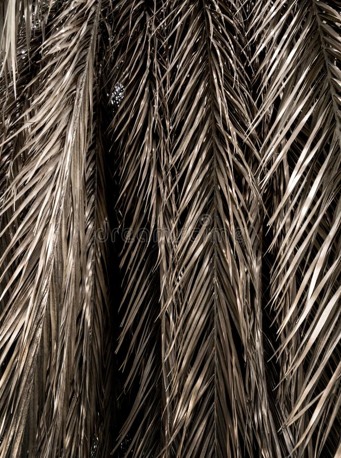 Brown strips of dry palm leaf parts. Abstract background royalty free stock photo
