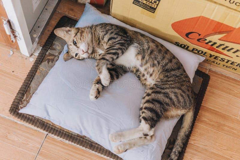 Brown Tabby Cat giace su Cuscino di Grigio fotografia stock