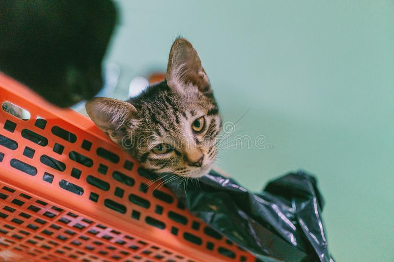 Brown Tabby Cat Lying On Plastic Rack Free Public Domain Cc0 Image