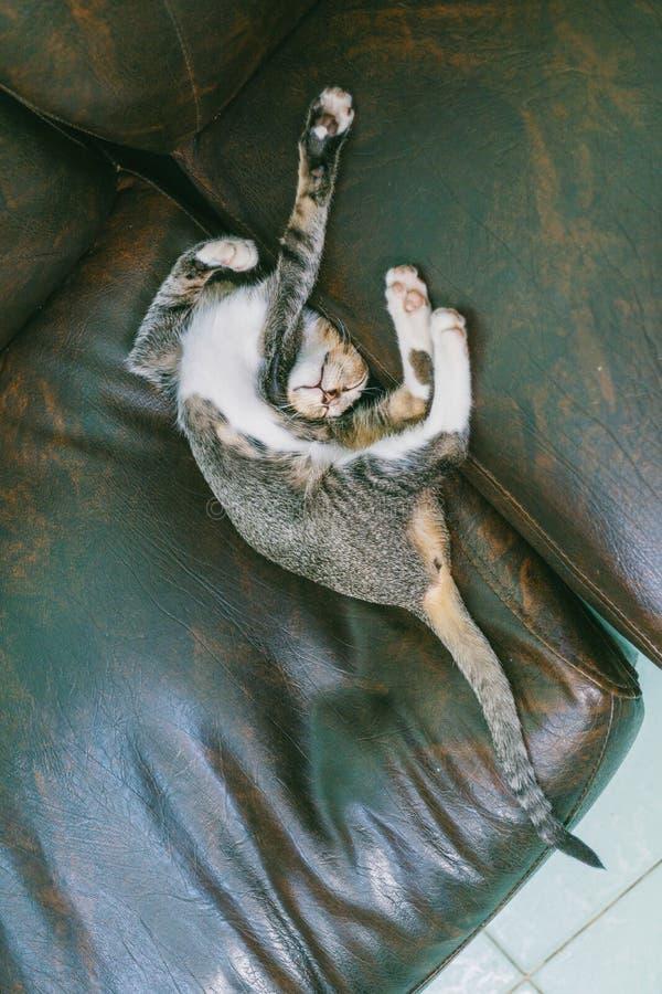 Brown Tabby Cat Lying on Sofa stock photography