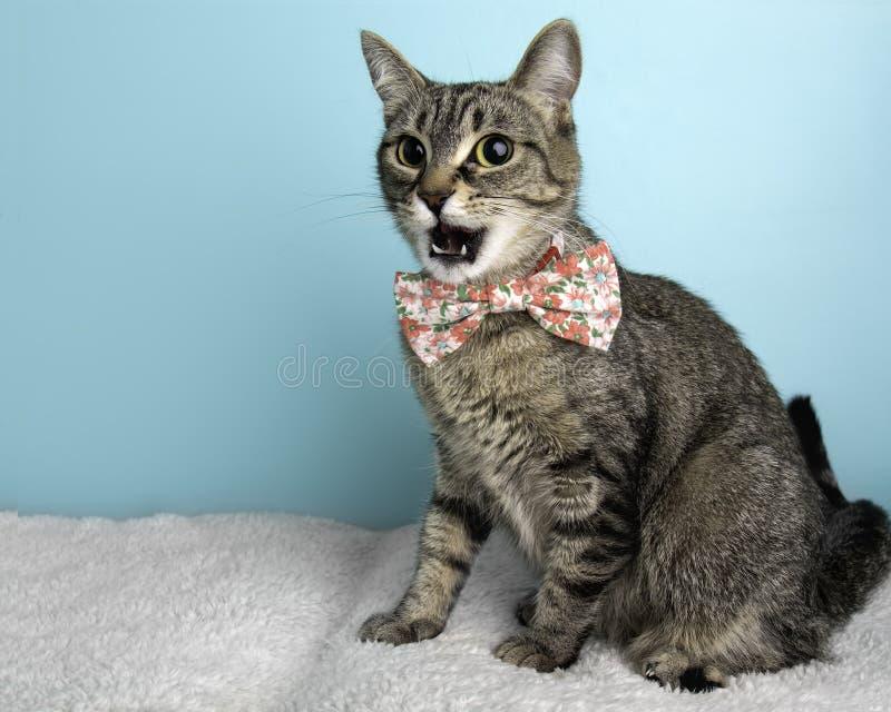Brown Tabby Cat Portrait im Studio und im Tragen einer Fliege stockbilder