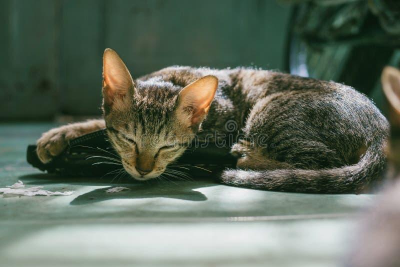 Brown Tabby Cat Sleeping stock image
