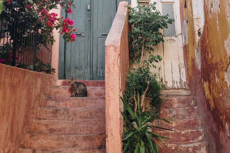 Brown Tabby Cat on Brown Stairway With Pink Bougainvillea royalty free stock photo