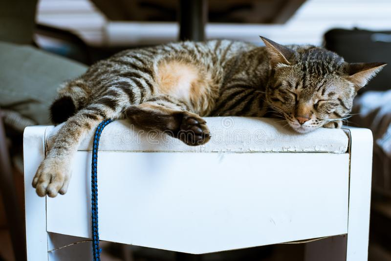 Brown Tabby Cat on White Wooden Furniture stock image