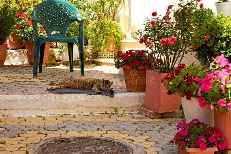 Brown tabby kota dosypianie na ulicie w Grecja fotografia royalty free