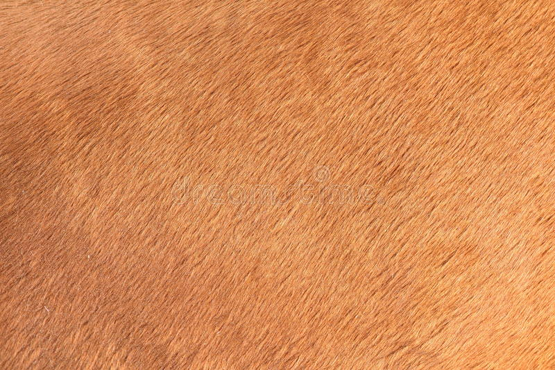 Brown texture of horse hair. Detail on the texture of brown horse hair royalty free stock image
