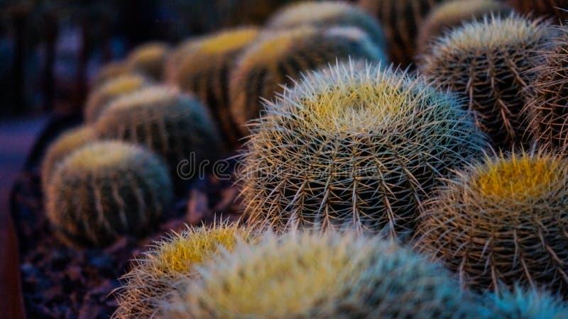 Brown Thorny Plant Free Public Domain Cc0 Image