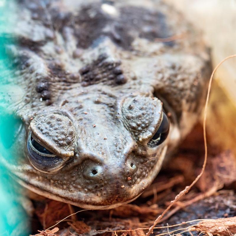 Brown toad head in aquarium. royalty free stock photography