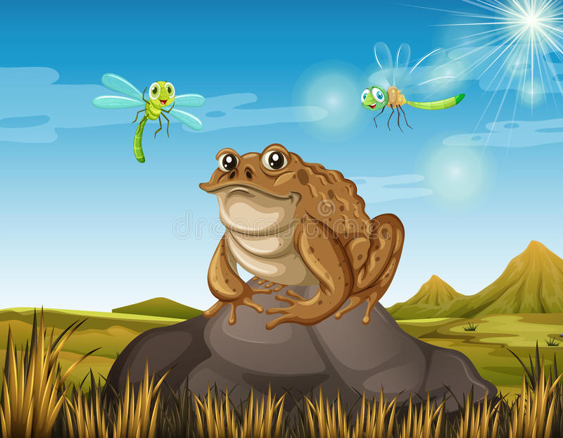 Brown toad sitting on rock vector illustration