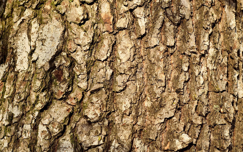 Brown tree bark stock images
