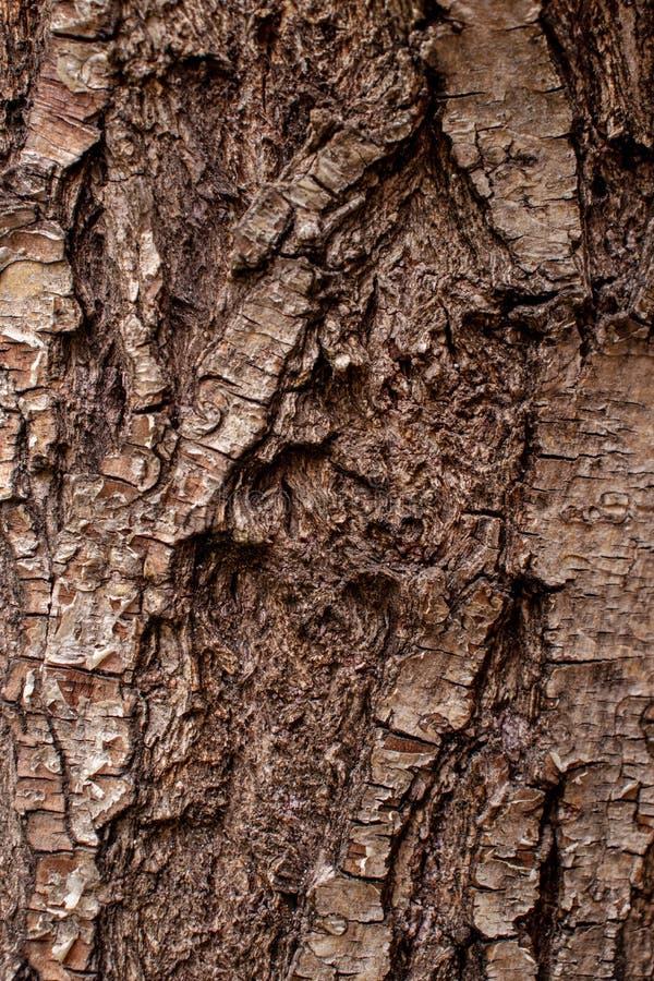 Brown tree bark trunk background pattern design. Wooden stock photos