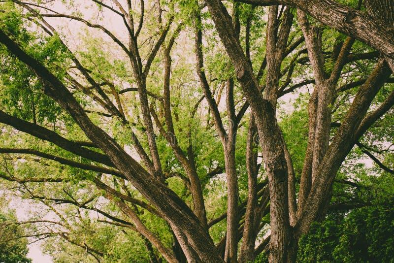 Brown Tree at Daytime stock photos