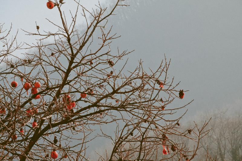 Brown Tree With Orange Furin stock photography
