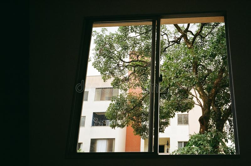Brown Tree Outside Closed Glass Window stock images