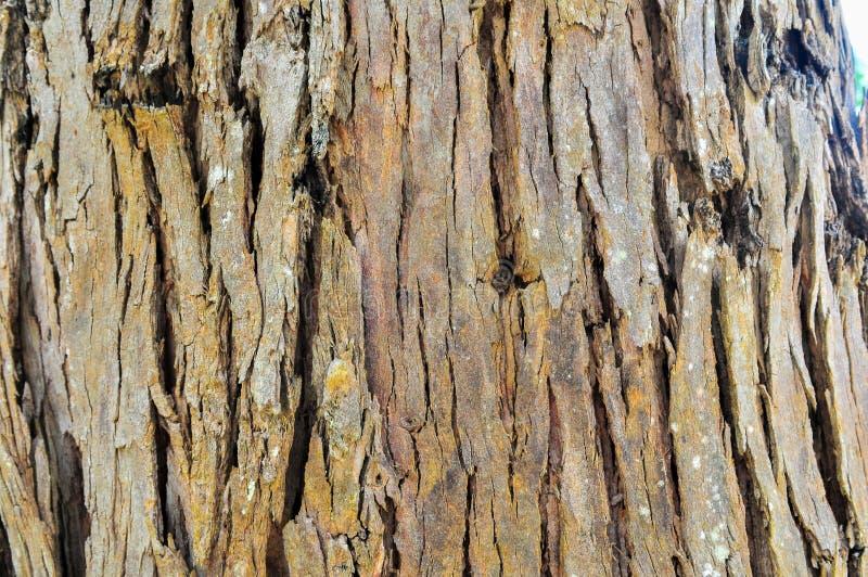 Brown Tree Wood royalty free stock photo