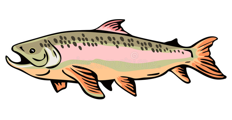 Brown Trout. Vector art of a Brown Trout with speckles royalty free illustration
